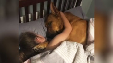 girl-and-dog-sleep-together