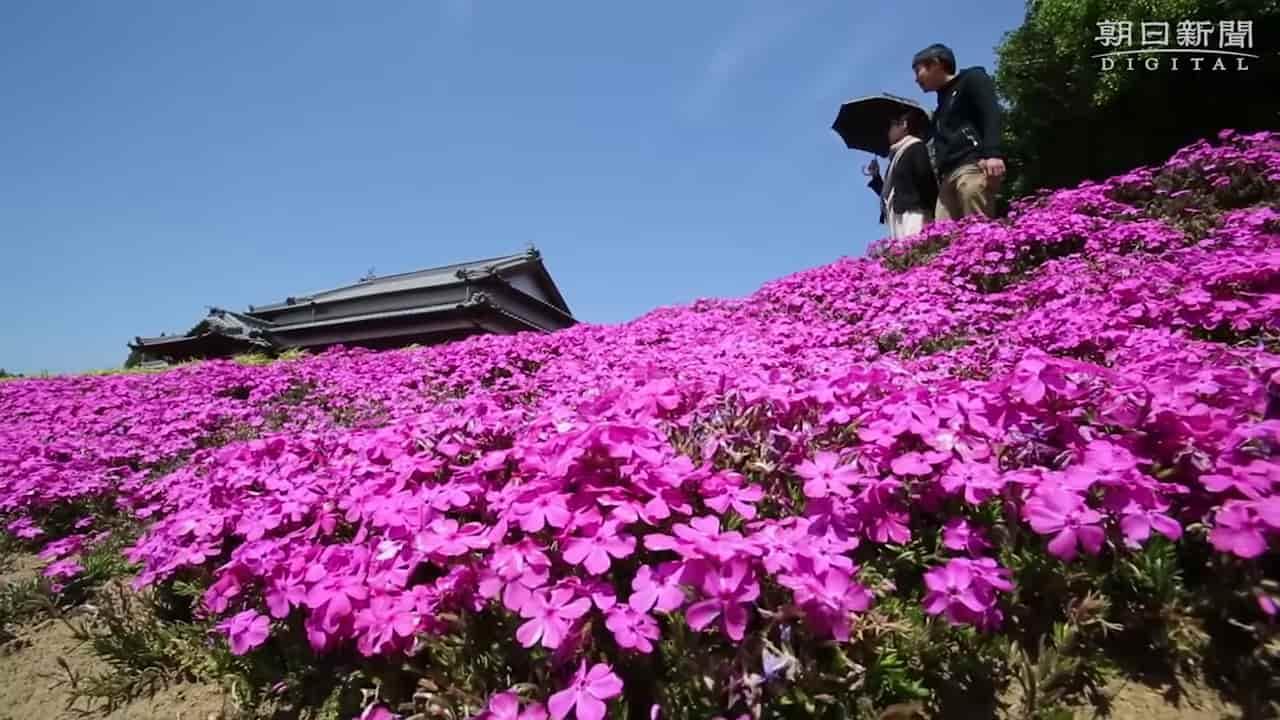 Japanese-husband-makes-garden-for-blind-wife-3