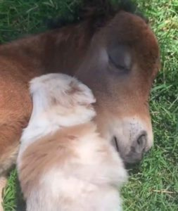 horse-puppy-snuggle