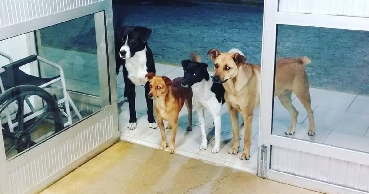 dogs-wait-for-owner-outside-hospital