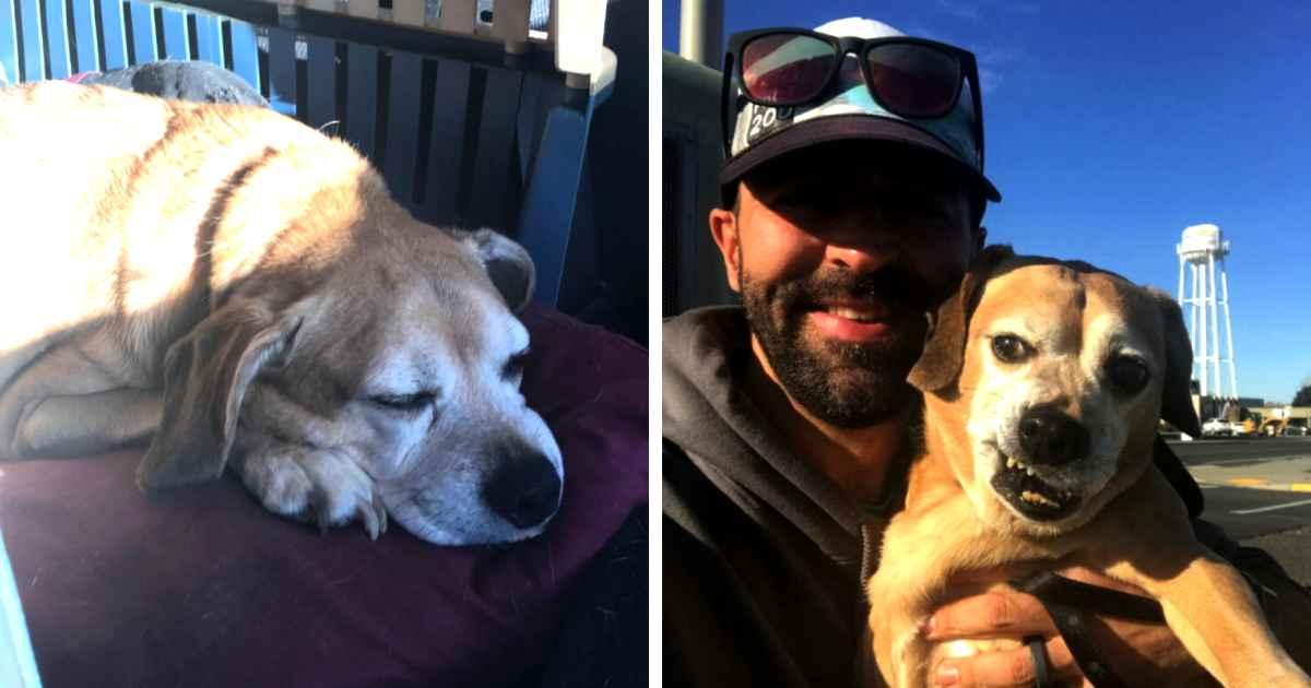 man-reunites-dog-terminal-ill-owner