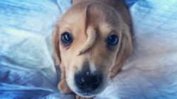 puppy-tail-head