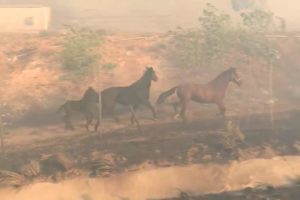 horse-saves-family-wildfire-2