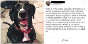 blind-man-dog