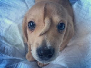 puppy-tail-head-4