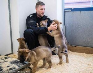 manchester-puppies-4