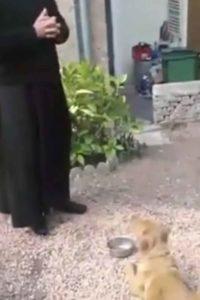 praying-dog-2