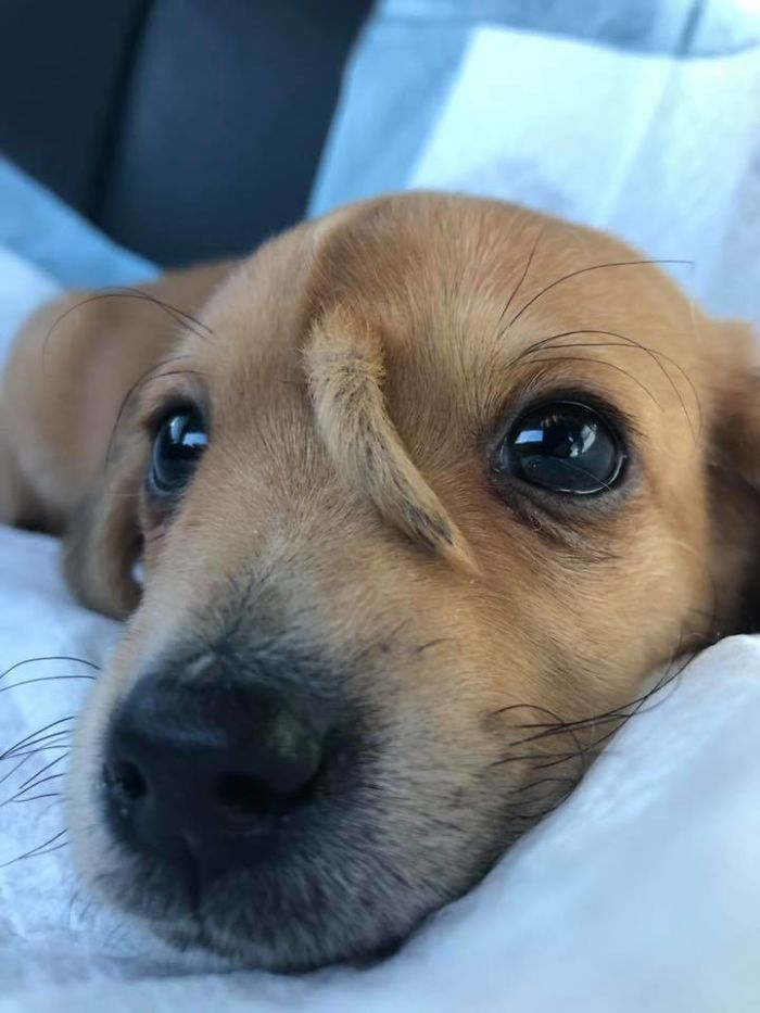 puppy-tail-head-2