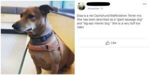 blind-man-dog-description-3