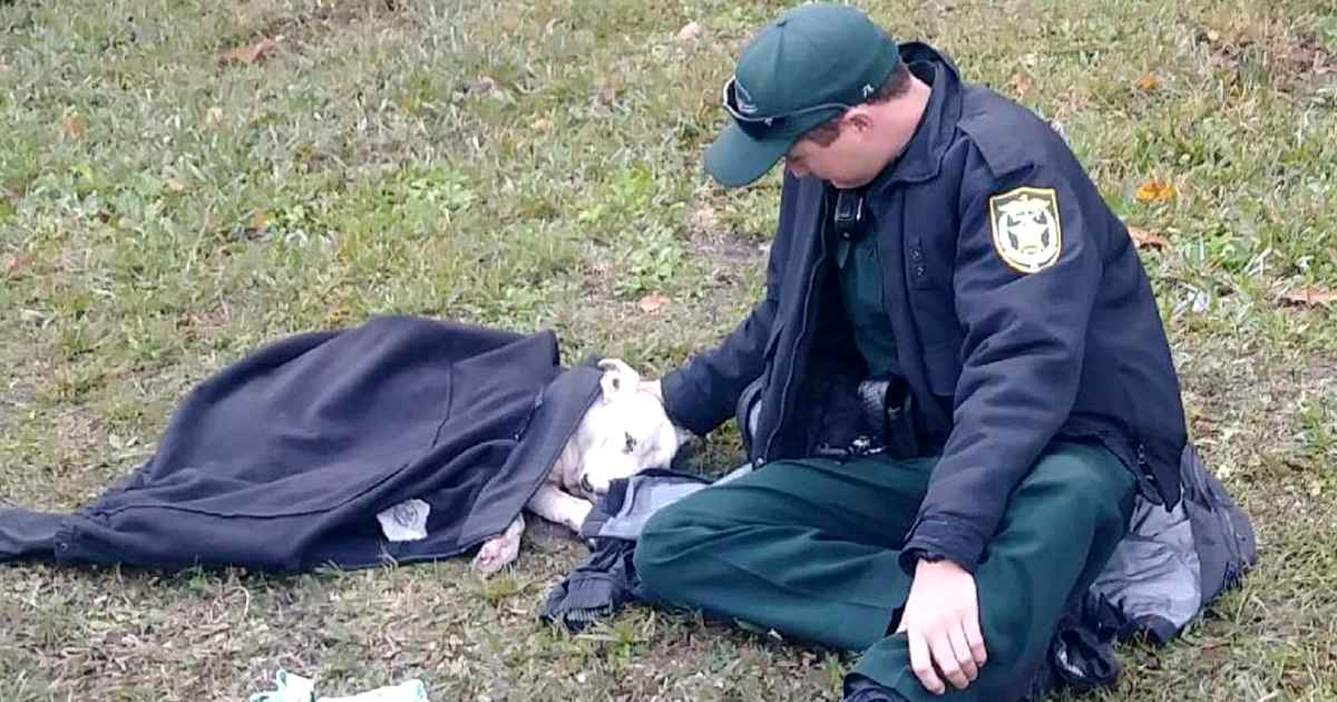 Kind Hearted Police Officer Uses Own Coat To Keep Injured