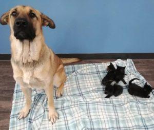 dog-care-abandoned-kittens-4