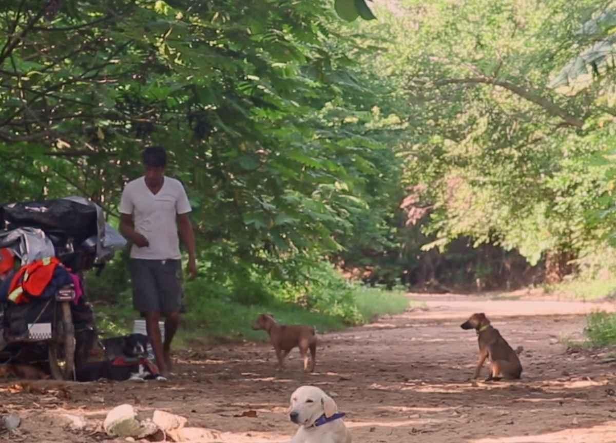 edgardo-perros-dogs-3