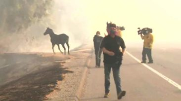 horse-saves-family-wildfire
