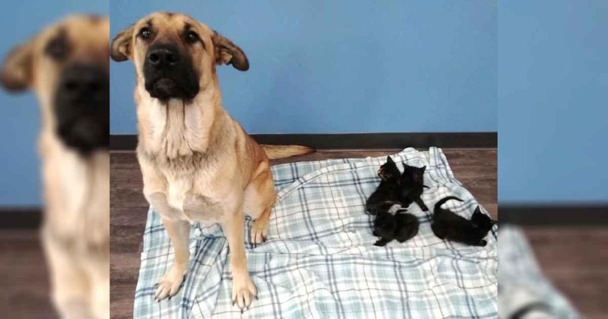 dog-care-abandoned-kittens