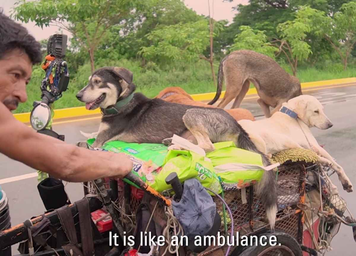edgardo-perros-dogs-2