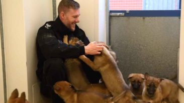 manchester-police-puppies