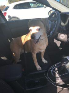 man-reunites-dog-terminal-ill-owner-2