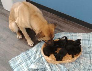 dog-care-abandoned-kittens-3
