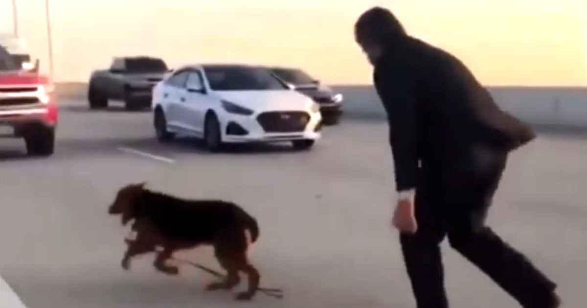 drivers-save-dog