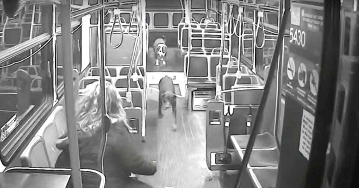 bus-driver-saves-dogs