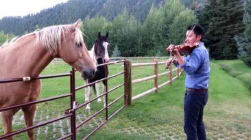 horses-violin