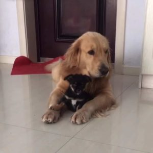 dog-meets-puppy-3