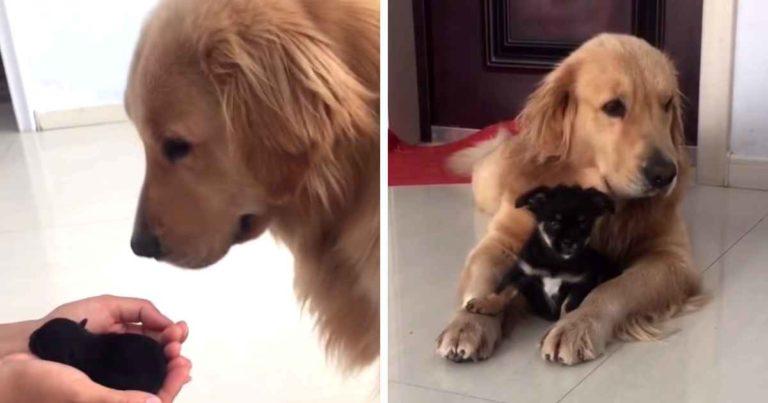 dog-meets-puppy