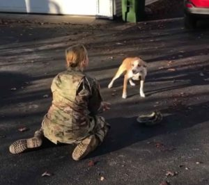 soldier-reunites-with-dog-2