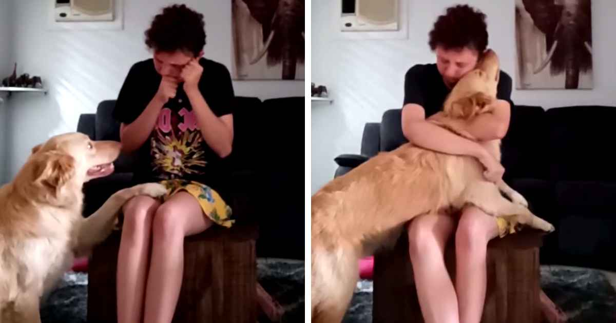 service-dog-helps-panic-attack