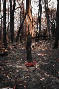 australian-fires-2