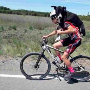 cyclist-carries-dehydrated-dog-3
