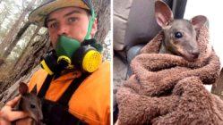 australian-farmer-rescues-kangaroo