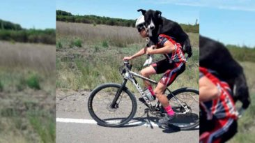cyclist-carries-dehydrated-dog