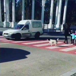 dog-helps-kids-cross-street-3