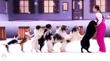 alexa-lauenburger-dogs-agt