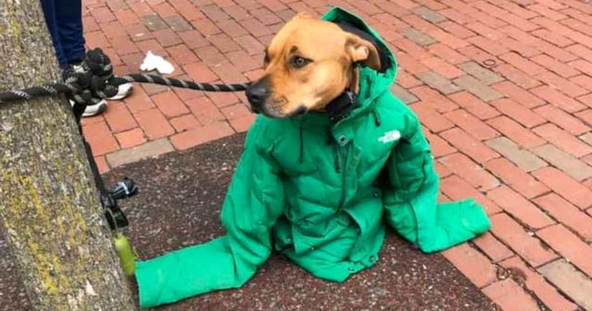 woman-gives-coat-to-dog