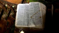 bible-unharmed-in-tornado