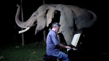 moonlight-sonata-elephant