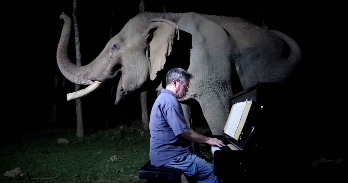 moonlight-sonata-elephant
