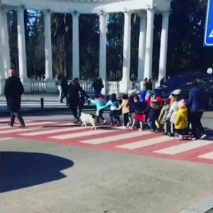 dog-helps-kids-cross-road