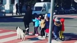 dog-helps-kids-cross-street