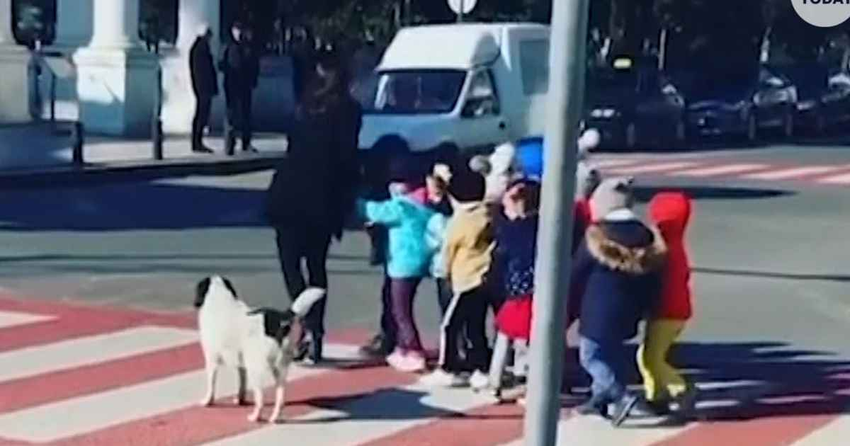 dog-helps-kids-cross-street