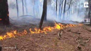 farmer-rescues-baby-kangaroo