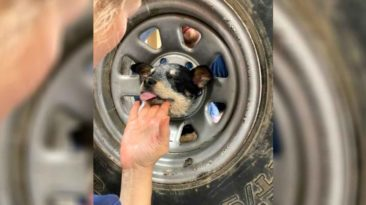 dog-head-stuck-in-wheel-rim