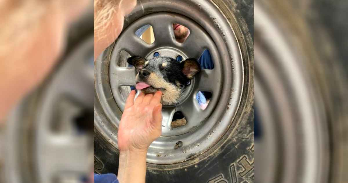 dog-head-stuck-in-wheel-rim