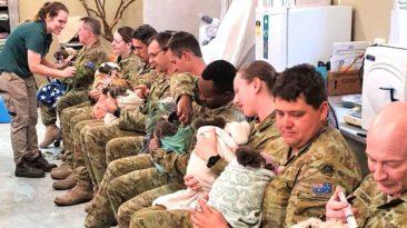 australian-soldiers-cares-koalas