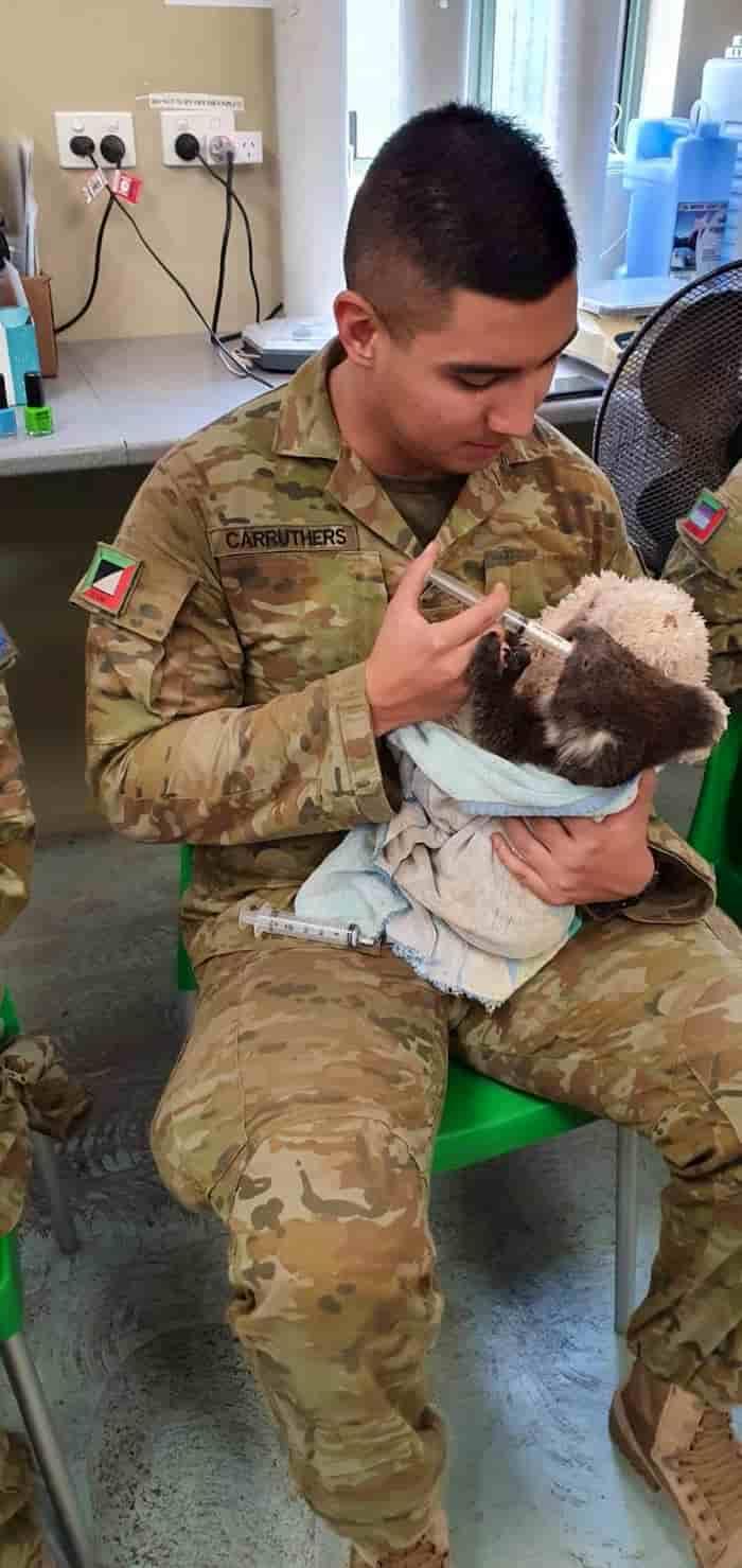 soldiers-cares-koalas