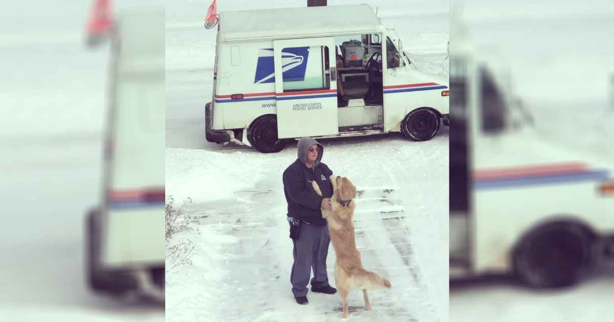 dog-waits-for-mailman