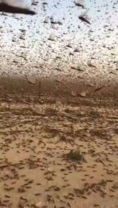 locust-bible-prophecy