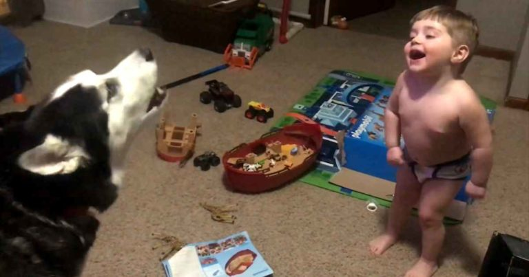husky-howling-with-baby